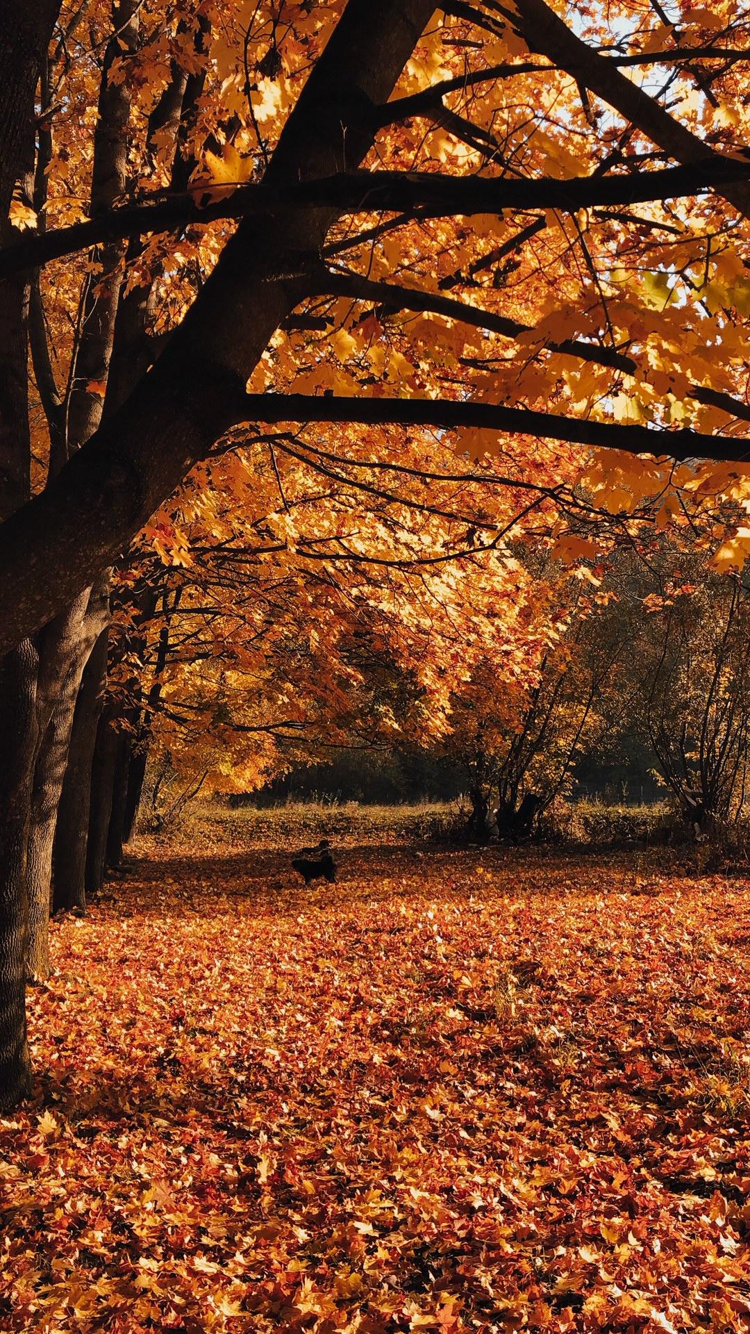 Autumn picture